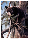 Out on a Limb Premium Giclee Print by Kevin Daniel