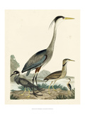 Heron Family I Prints by A. Wilson