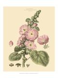 Blushing Pink Florals V Art by  John Miller (Johann Sebastien Mueller)