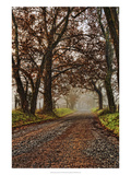 Morning on Sparks Lane II Prints by Danny Head