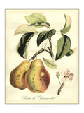 Printed Tuscan Fruits IV Giclee Print by  Vision Studio