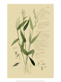 Ornamental Grasses IV Giclee Print by A. Descubes