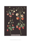 Strawberries Prints by George Brookshaw