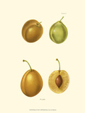 Plums I Posters