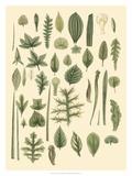 Abundant Foliage I Prints by  John Miller (Johann Sebastien Mueller)
