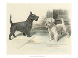 Two Scotties Print by H. Dixon