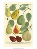 Plentiful Pears I Prints by Johann Wilhelm Weinmann