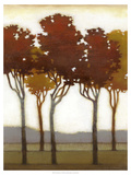 Arboreal Grove I Premium Giclee Print by Norman Wyatt Jr.