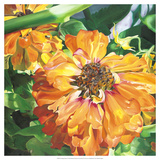 Fading Zinnia Premium Giclee Print by Bethany Winslow