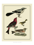 Bird Family II Print by A. Lawson