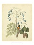 Catesby Bird & Botanical II Giclée-Premiumdruck von Mark Catesby