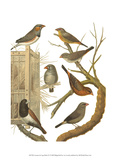 Canaries and Cage Birds IV Art by  Cassel