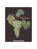 White Grapes Posters by George Brookshaw