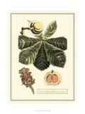 Crackled Paradise Foliage II Prints