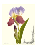 Iris Giclee Print by James Linton Sain