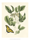 Butterfly and Botanical II Prints by Mark Catesby