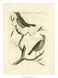 Nozeman Birds II Posters by  Nozeman
