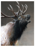 American Icon- Elk Giclee Print by Kevin Daniel