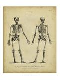 Anatomy Study I Plakater af Jack Wilkes