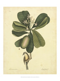 Catesby Bird & Botanical III Plakater af Mark Catesby