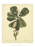 Mark Catesby - Catesby Bird & Botanical III Obrazy