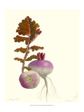 Turnip Giclee Print by James Linton Sain