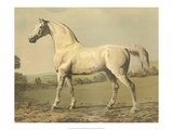 Cassell's Thoroughbred II Prints by  Cassell