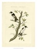 Nozeman Birds IV Posters by  Nozeman