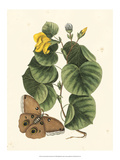 Butterfly and Botanical I Posters by Mark Catesby