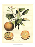 Printed Tuscan Fruits III Poster by  Vision Studio