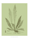 Fresh Ferns I Poster von Samuel Curtis