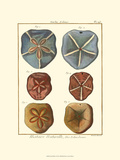 Sand Dollars I Prints by  Diderot