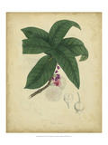 Engelmann Botanical V Print by  Engelmann