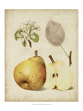 Harvest Pears II Prints by Heinrich Pfeiffer