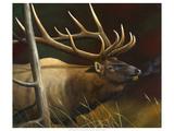 Elk Portrait II Premium Giclee Print by Leo Stans