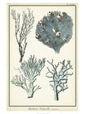 Oversize Coral Species II Posters