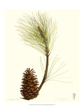 Pine Tree III Giclee Print by James Linton Sain