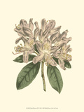 Pastel Blooms IV Posters av Samuel Curtis