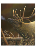 Elk Portrait I Art by Leo Stans