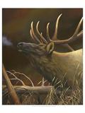 Elk Portrait I Premium Giclee Print by Leo Stans