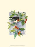 Red-Breasted Grosbeak Art by Janet Mandel
