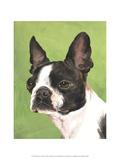 Dog Portrait, Boston Premium Giclee Print by Jill Sands