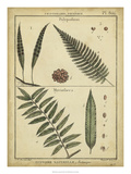 Diderot Antique Ferns III Posters af Daniel Diderot