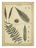 Diderot Antique Ferns III Poster von Daniel Diderot