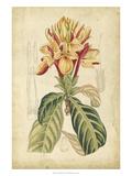 Curtis Tropical Blooms IV Plakat af Samuel Curtis