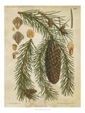 Vintage Conifers I Premium Giclee Print