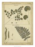 Diderot Antique Ferns IV Kunstdrucke von Daniel Diderot