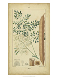 Vintage Turpin Botanical V Prints by  Turpin