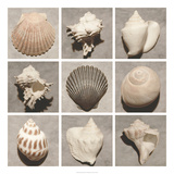 Weathered Shell Sampler Prints by Renee W. Stramel