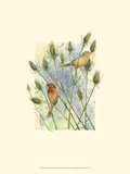 House Finches Posters by Janet Mandel